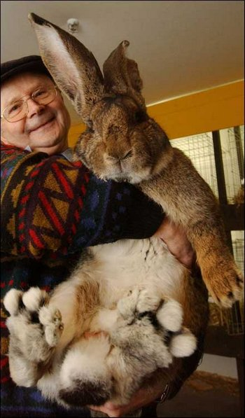 Гигантский  кролик