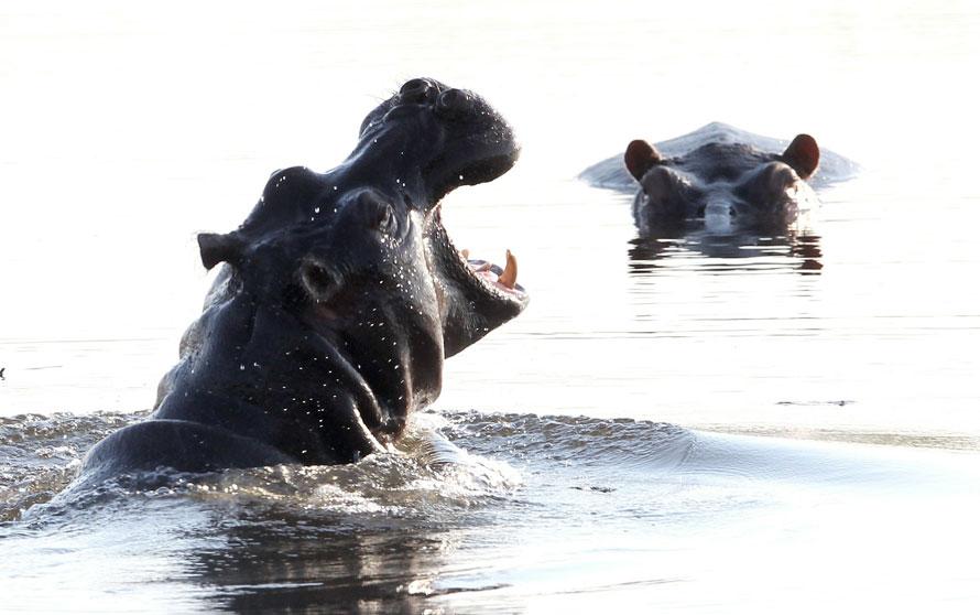 23.06.2010 Республика Ботсвана