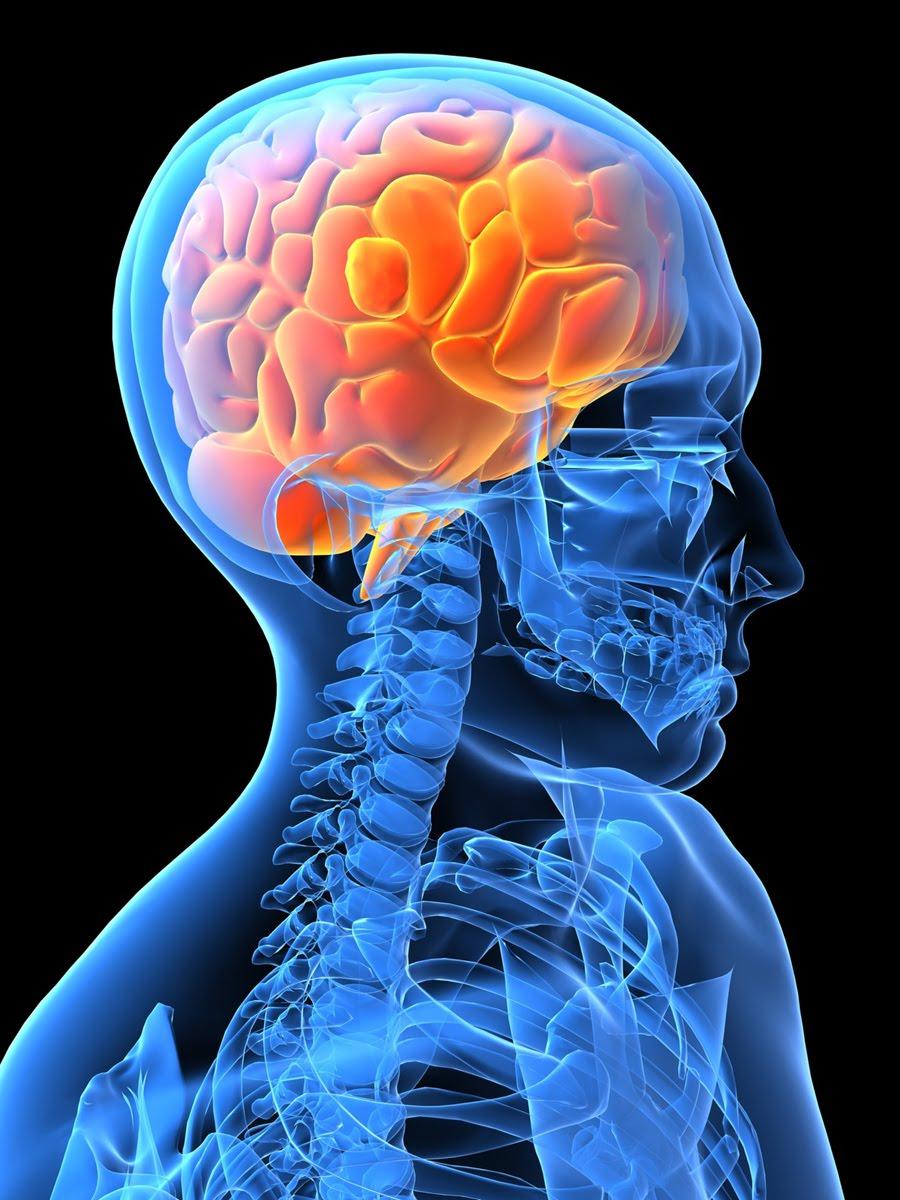 Наш мозг искаженно воспринимает тело