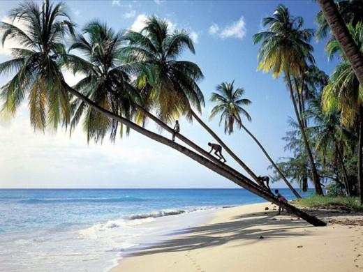 Названы самые безопасные туристические направления 2011 года