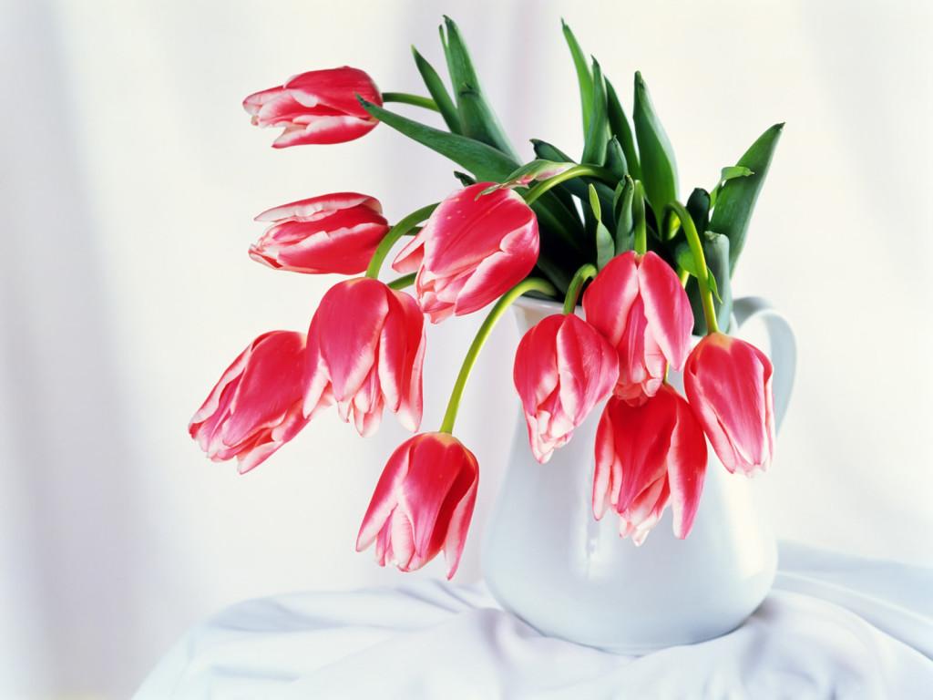 Обои для рабочего стола, Цветы - Flovers (235) .