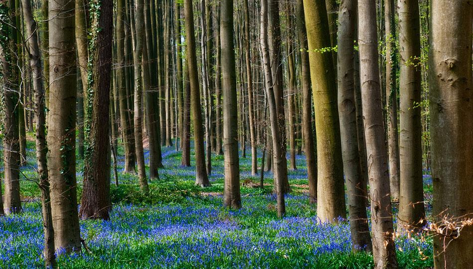Закон есть, леса нет. Оголодавшие украинцы распродают богатство Незалежной