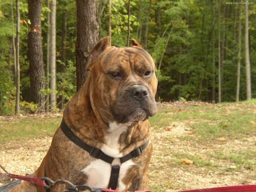 Преса Канарио - Опасная собака
