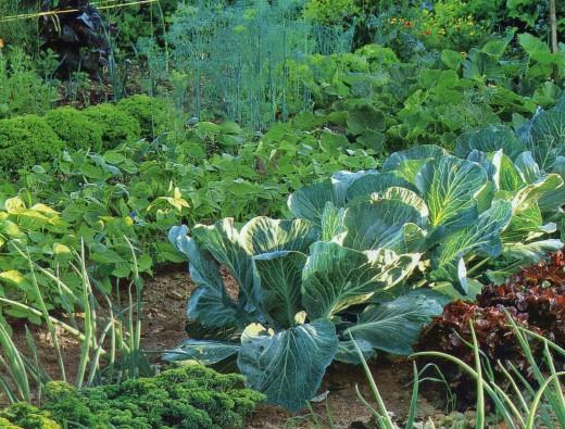Вот приблизительная картина идеального <b>огорода</b>.  На равнине, где место