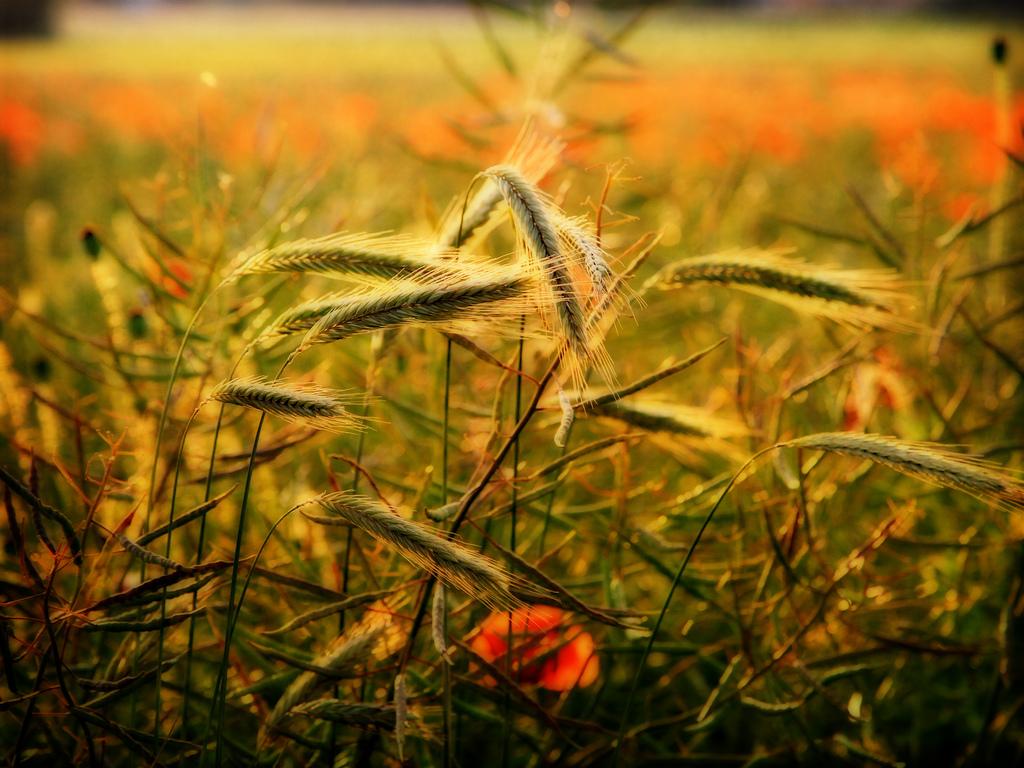 Картинки с природой август