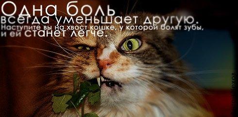 Правила жизни в картинках Citati_031