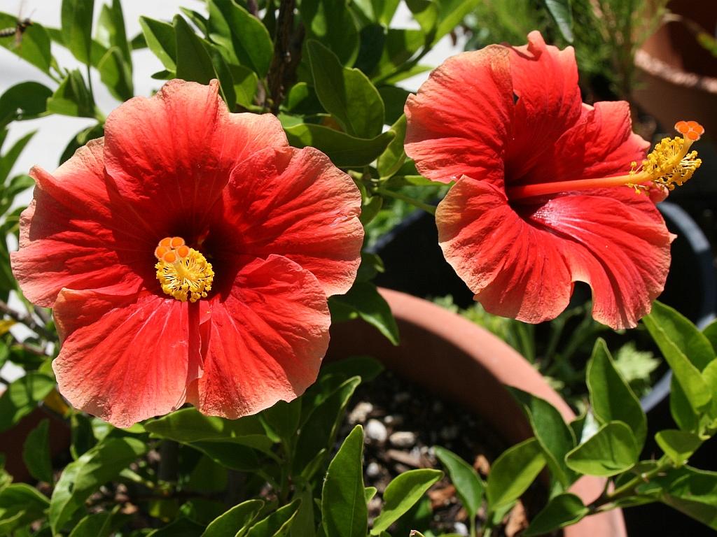 Цветы для счастья в доме - какие комнатные цветы приносят 3