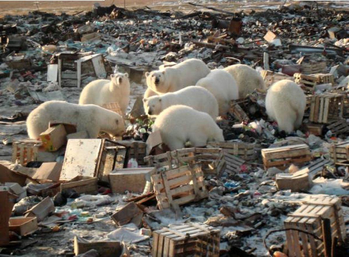 в проблем арктике экологических фото