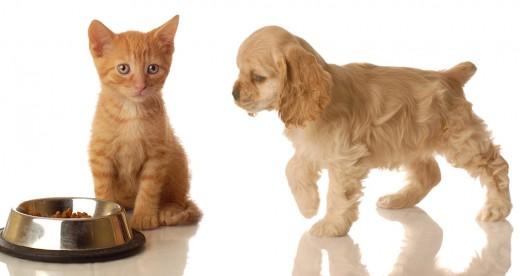Корм для животных