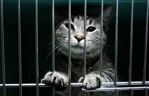 Судебные процессы над животными