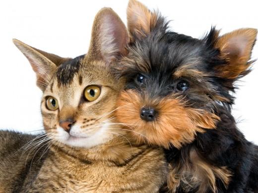 Инфекции, переносимые животными