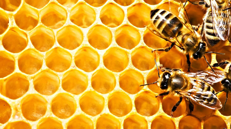 картинки пчел и меда