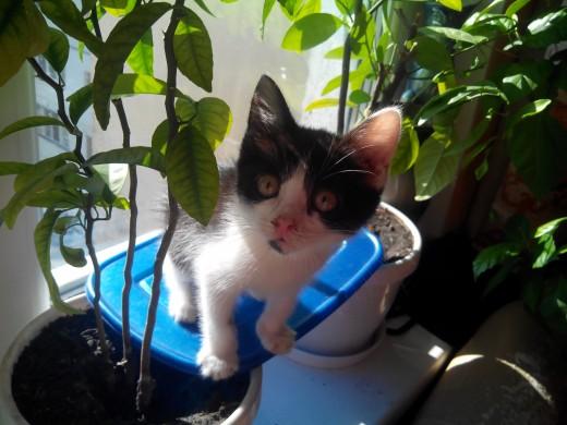 Кошка с дачи: забрать нельзя оставить