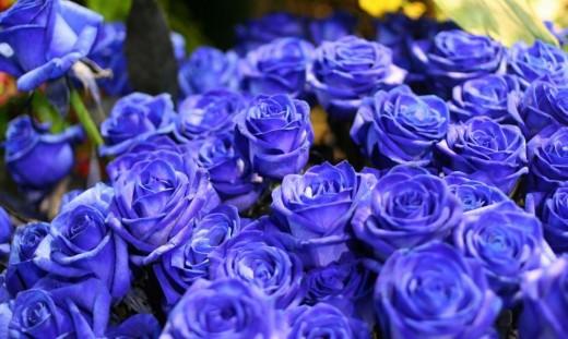 Синие розы - когда оживает сказка