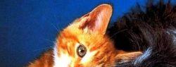 Ежегодный Ветеринарный Фестиваль пройдет с 9 по 11 октября 2013 г. в Сочи