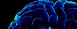 Мозг человека, только факты