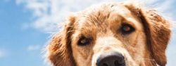 Базы отдыха — где можно отдыхать с животными