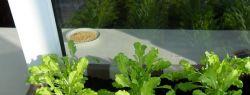Выращивать овощи дома можно и зимой