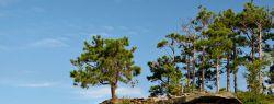 Скала Turnip на озере Гурон (фото)