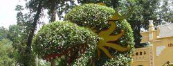 Искусство топиари (фото)