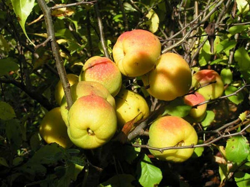 Деревянная груша