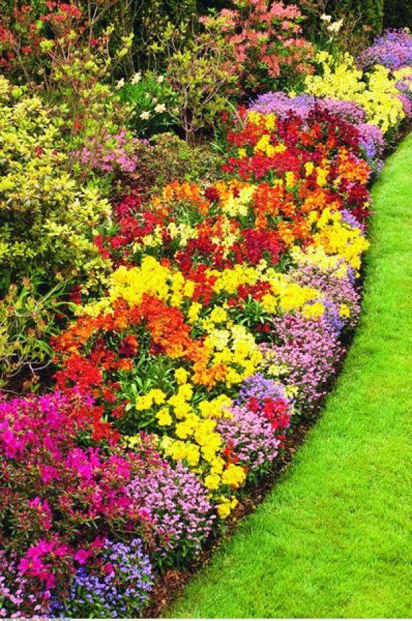 Какие многолетники цветов сажают осенью 488