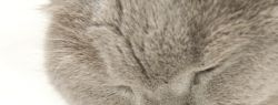Как выбрать сухой кошачий корм?