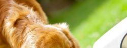 «Педигри»: отзывы и особенности питания