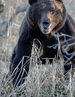 Кода медведь совсем рядом (фото)