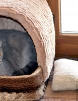 Какой домик нужен для кошки, как подобрать?