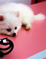 Как поддерживать здоровье собаки?