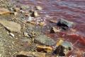 Новости России и мира. Токсичные водоросли под Анапой