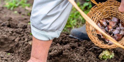 Подзимний сев — весной будет урожай