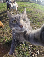 В Instagram появился кот, который сам делает селфи