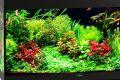 Аквариумы «Биодизайн»: идеальное соотношение цена/качество