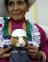 Фестиваль морских свинок в Перу (фото)