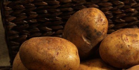 Как поторопить ранний картофель?