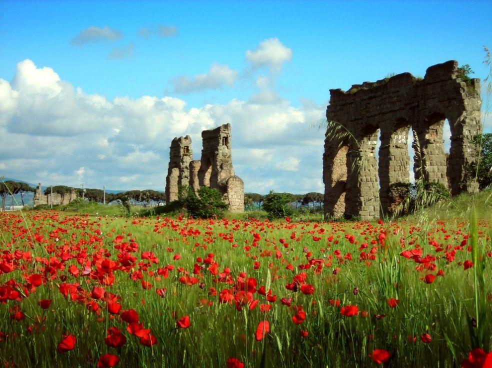 Poppies nos subúrbios de Roma