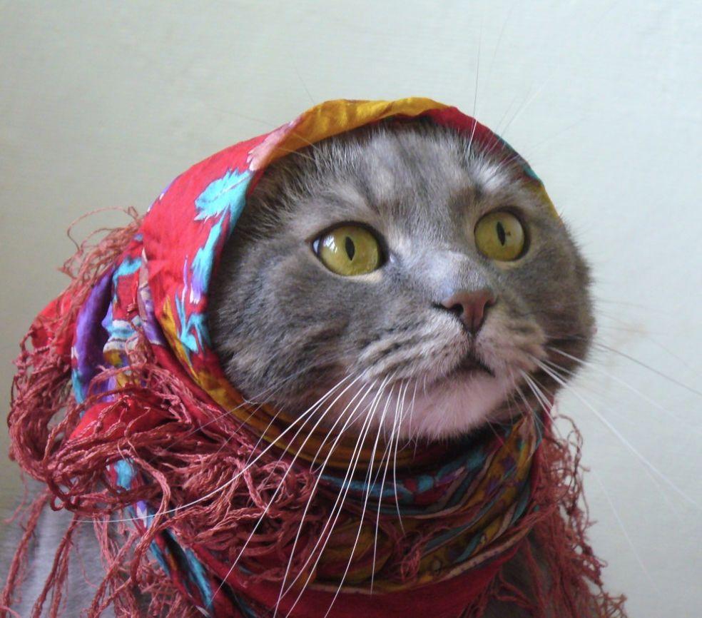 Кошка - Семга