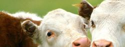 Мясо влияет на изменения климата?