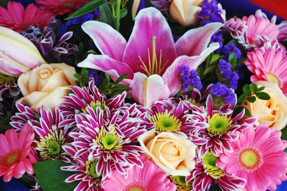 глаз покажите картинки цветов разных цветов Дорин