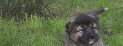 Воспитание щенка хозяином и наоборот