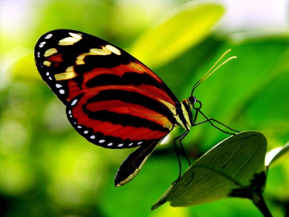 Бабочка в ботаническом саду Тускона, США