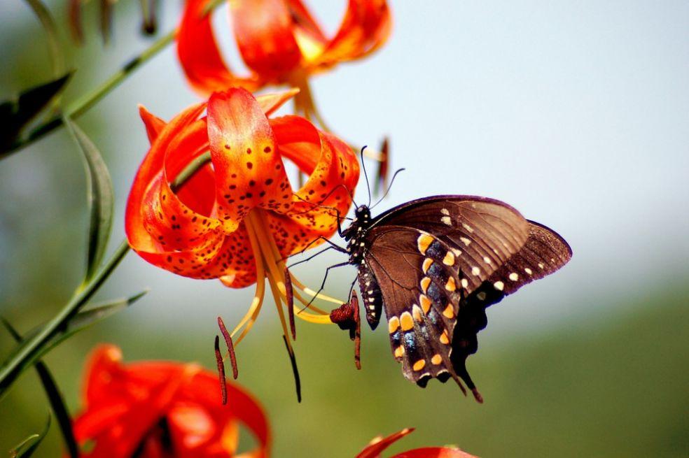 Фото цветы с бабочками