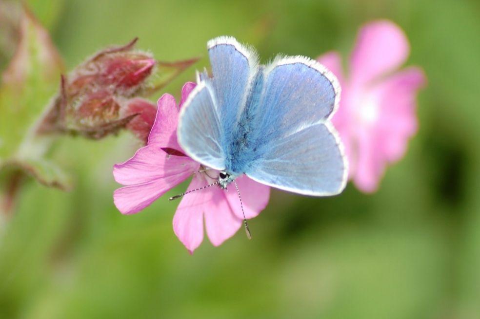 Бабочка в Марфилде, Великобритания