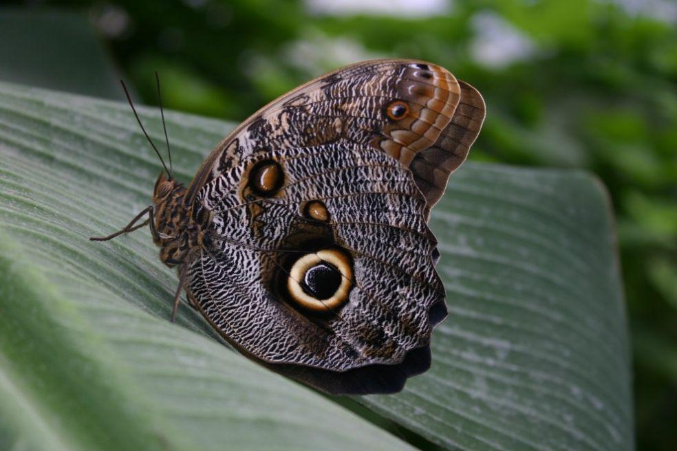 Бабочка в зоопарке Лонглит, Великобритания