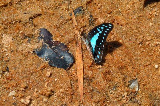 Бабочки — красота созданная природой