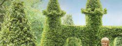 Как вырастить красивый сад?
