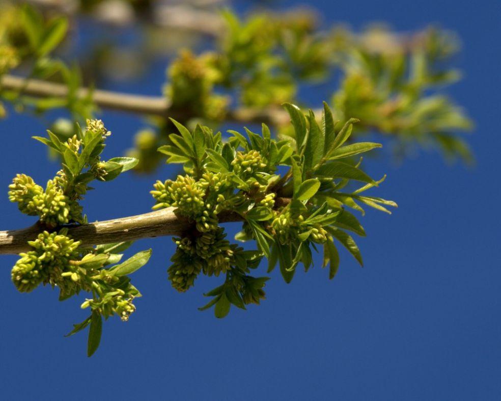 Весна в Аризоне