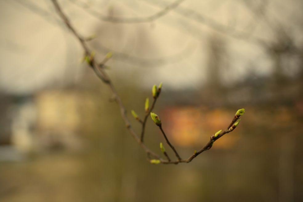 Первые весенние листья